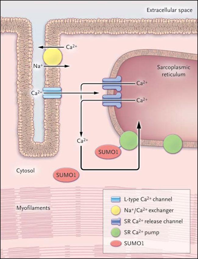 esteroides para aumentar masa muscular rapido