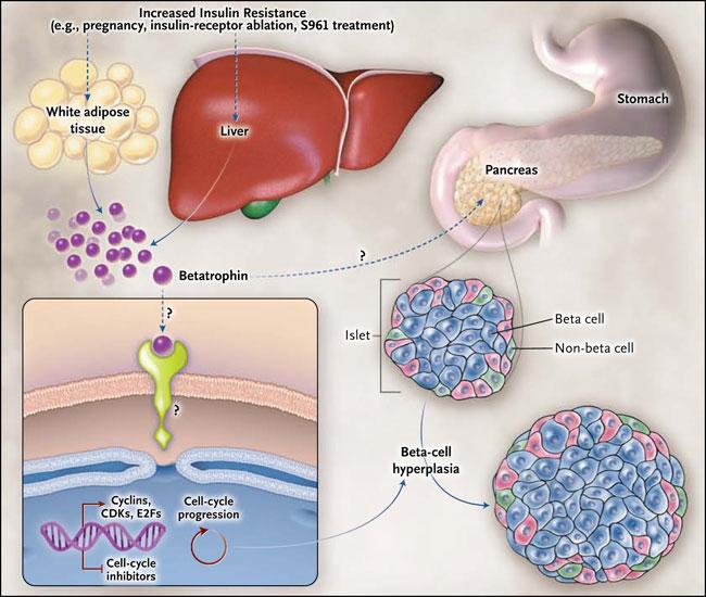 efectos positivos y negativos de los esteroides anabolicos
