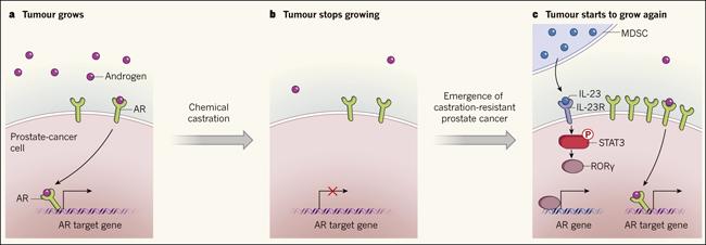 tratamiento hormonal del cáncer de próstata cuando p. ej.